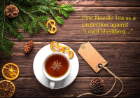 Pine Needle Tea as a Potential Antidote for Transmission of Spike Protein